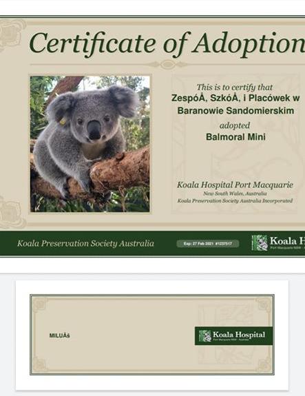 Certyfikat adopcji Koali